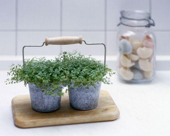 evde bitki yetiştirmek